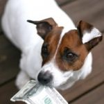 Six Ways to Save Money With Your New Dog
